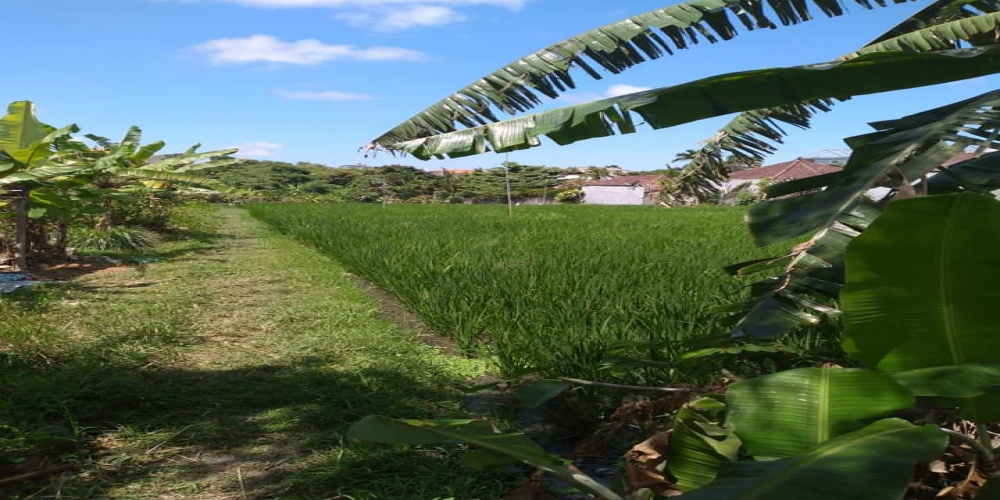Berawa, ,Land for sale,For Sale,1356
